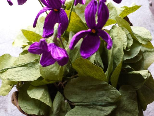 Papier-terapia: le violette con Rosanna Frapporti
