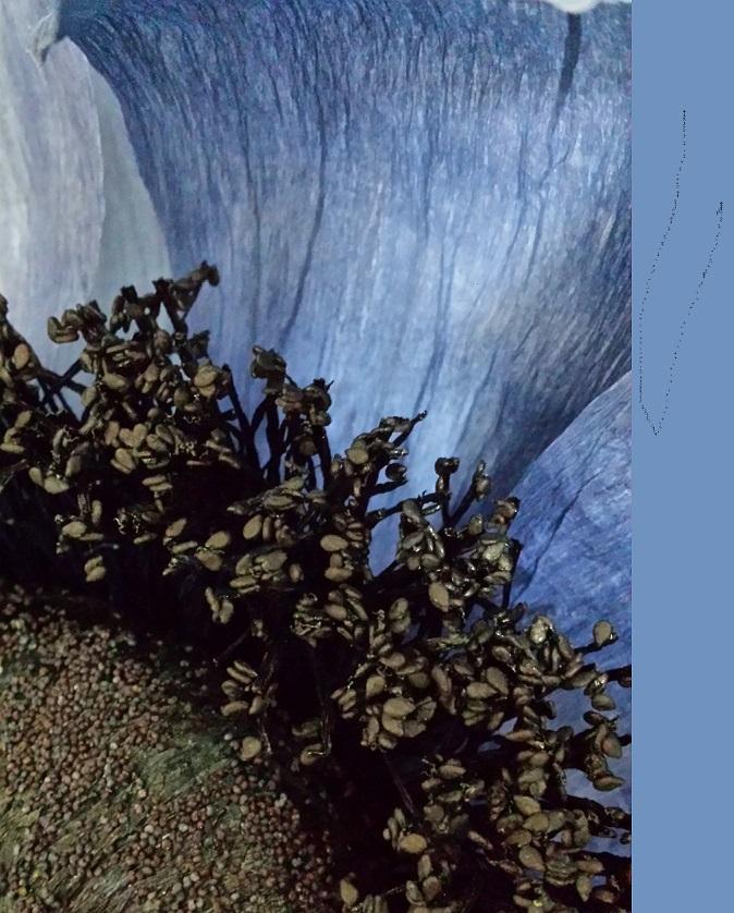 Fiori in Atelier: l'anemone con Rosanna Frapporti