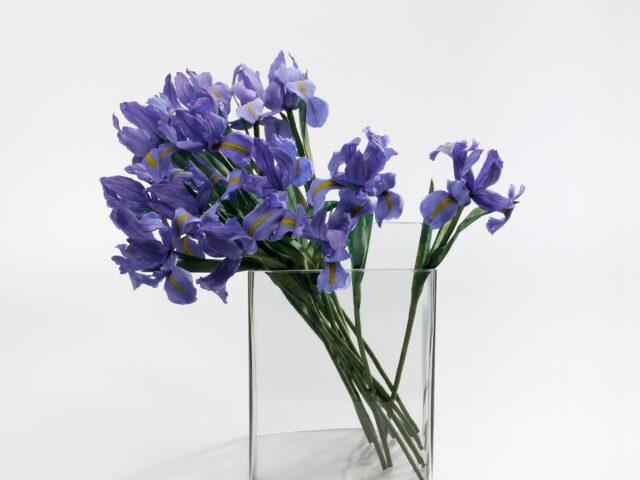 Fiori in Atelier: l'iris con Rosanna Frapporti