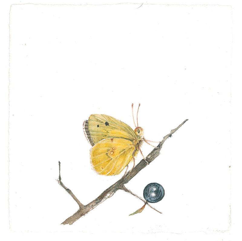 haiku e farfalla gialla