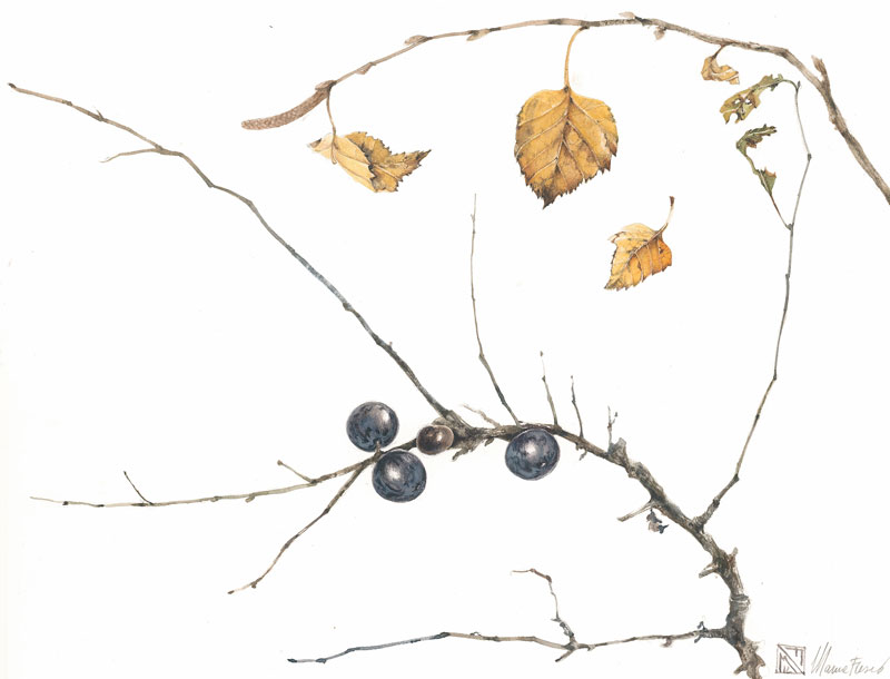 haiku, foglie e bacche